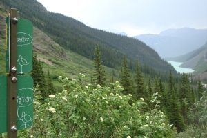 """Listen"" - Plain of the Six Glaciers, Lake Louise, Alberta - Summer 2010 - Photo: Sherry Ann"